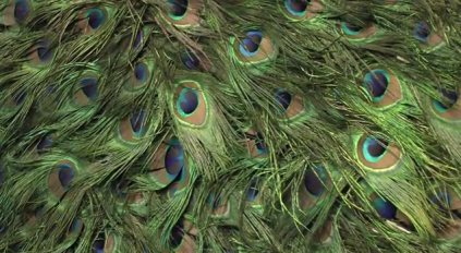 Work by Chantal Powell, made of peacock feathers, in 'Victoriana' at Guildhall Art Gallery, London. Image courtesy bbc.co.uk