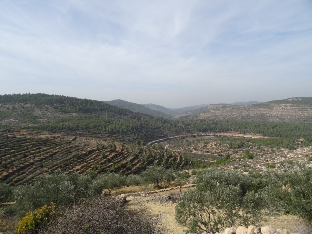 A view of Battir, a UNESCO World Heritage Site in Palestine/Occupied Territories, 11 November 2014. Photo credit Kelise Franclemont.